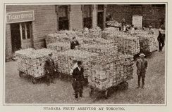 Fruit from the Niagara region for distribution, ca. 1914