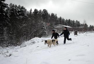 Прогулка детей с ездовыми собаками в России