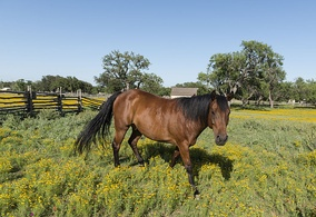Horse in field in Lyndon B. Johnson National Historical Park in Johnson City, Texas