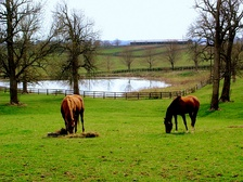 Kentucky's Inner Bluegrass region features hundreds of horse farms.