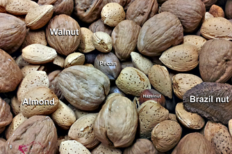 "Some common ""culinary nuts"", including hazelnuts (which are also botanical nuts), Brazil nuts (which are not botanical nuts, but rather seeds of a capsule), walnuts, pecans, and almonds (which are not botanical nuts but rather the seeds of drupes)."