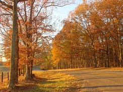 Autumn in Tennessee. Roadway to Lindsey Lake in David Crockett State Park, located a half mile west of Lawrenceburg.
