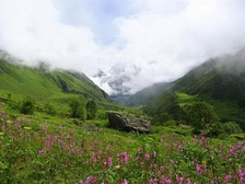 Valley of Flowers National Park is UNESCO World Network of Biosphere Reserves since 2004.