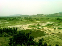 Paddy fields prior to planting in Andhra Pradesh, India
