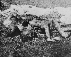 The bodies of prisoners executed by the Ustaše in Jasenovac[38]