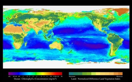 SeaWiFS map showing the levels of primary production in the world's oceans
