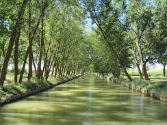 Canal de Castilla is a canal that runs along 207 kilometers, crossing 38 municipalities. Between the 18th century and early 19th century it was built, initially to transport wheat, now it is used for irrigation.