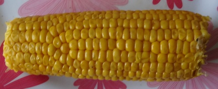 Ear of maize with irregular rows of kernels