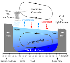 Diagram of the quasi-equilibrium and La Niña phase of the Southern Oscillation. The Walker circulation is seen at the surface as easterly trade winds which move water and air warmed by the sun towards the west. The western side of the equatorial Pacific is characterized by warm, wet low pressure weather as the collected moisture is dumped in the form of typhoons and thunderstorms. The ocean is some 60 centimetres (24 in) higher in the western Pacific as the result of this motion. The water and air are returned to the east. Both are now much cooler, and the air is much drier. An El Niño episode is characterised by a breakdown of this water and air cycle, resulting in relatively warm water and moist air in the eastern Pacific.