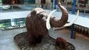 Что нам известно о мамонтах примерная высота мамонтов