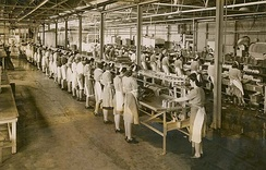 Women working in a cannery