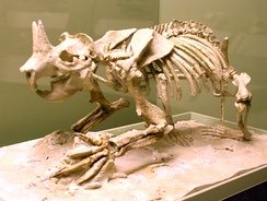 The horned gopher Ceratogaulus hatcheri, a burrowing mammal of the late Miocene to early Pleistocene, is the only known horned rodent.[81]