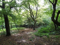 Heriot Wood, in the grounds of the Priory, probably dates back to the end of last Ice Age[4]