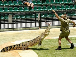 Irwin feeding a crocodile at Australia Zoo