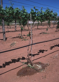 Drip irrigation system in New Mexico