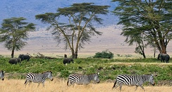 Savanna at Ngorongoro Conservation Area, Tanzania