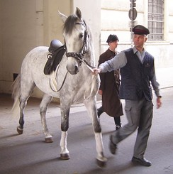 Lipizzan horses, like this one in Vienna, were used for chariot teams in Ben-Hur.