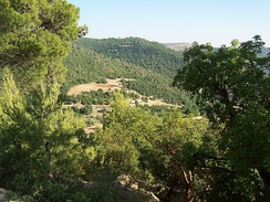 A forest in Ajloun, northern Jordan.