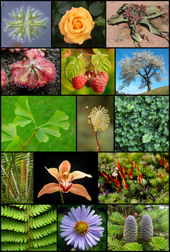There are many plant species on the planet.