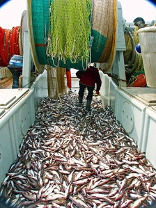 Wild fish stocks are a rivalrous good, as the amount of fish caught by one boat reduces the number of fish available to be caught by others.