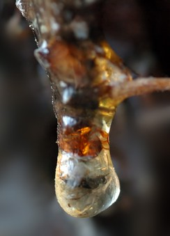 Insect trapped in resin