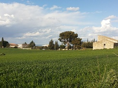 The countryside around Alcamo in spring