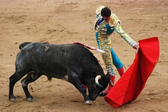 Bulls, like dogs and many other animals, have dichromacy, which means they cannot distinguish the color red. They charge the matador's cape because of its motion, not its color.