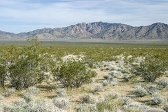 The Mojave Desert covers much of the Southwestern United States