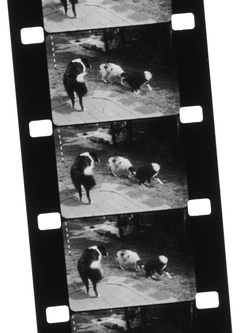 16 mm black and white reversal Silent Home Movie on double perforation film stock