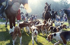 Fox hunting is historically linked with the East Midlands