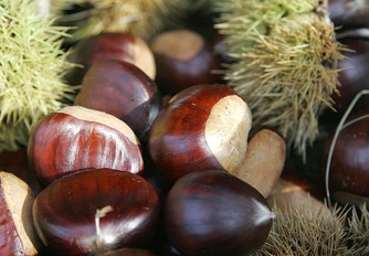 Chestnuts are both botanical and culinary nuts.