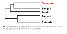 Genetic distance of Sinhalese to other ethnic groups in the Indian Subcontinent according to an Alu Polymorphism analysis.