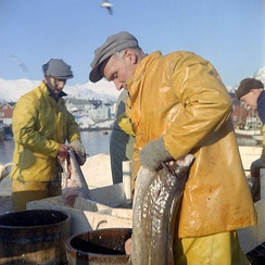 Cod fishery in Norway