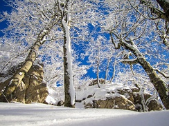 Snow at Dajti National Park, it generally melts quickly in the region.[34]