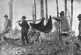 Hunters with an American black bear in the Great Smoky Mountains
