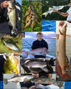 A few popular game fish around the world.