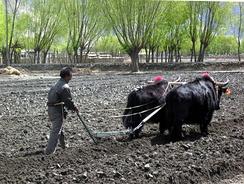 Як на вспашке поля (Тибет)