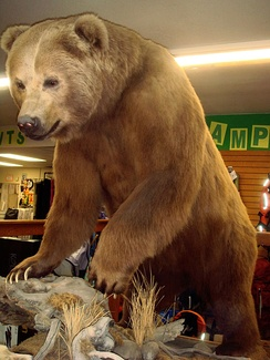 Preserved Kodiak bear in Big Ray's (formerly Mack's Sporting Goods) store