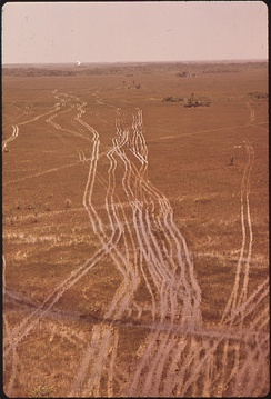 Swamp buggy tracks in the Big Cypress Swamp, 1972