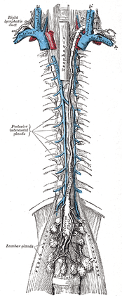 "Recent UVA research ""redrew the map"" of the human lymphatic system, shown here in the 1858 Gray's Anatomy."