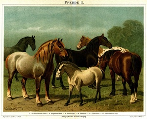 Light or saddle horse breeds