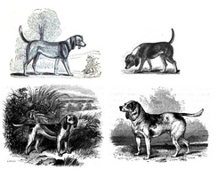 "Early images of the Beagle (clockwise from top left): 1833, 1835, Stonehenge's Medium (1859, reusing Youatt's 1852 ""Beagle"" image) and Dwarf Beagle (1859)."