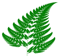 Barnsley fern created using the chaos game. Natural forms (ferns, clouds, mountains, etc.) may be recreated through an iterated function system (IFS).