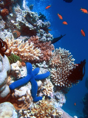 Coral reefs have a great amount of biodiversity.
