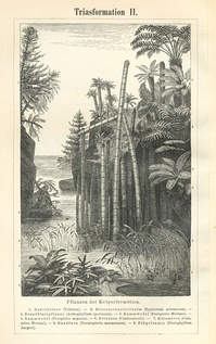 Triassic flora as depicted in Meyers Konversations-Lexikon (1885–90)