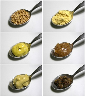 Mustard seeds (top left) may be ground (top right) to make different kinds of mustard. These four mustards are: English mustard with turmeric coloring (center left), a Bavarian sweet mustard (center right), a Dijon mustard (lower left), and a coarse French mustard made mainly from black mustard seeds (lower right).