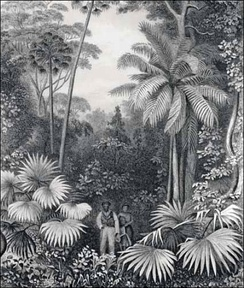 "United States Exploring Expedition, 1838–1842. Engraving from ""Narrative of the United States Exploring Expedition"", forest Illiwara, New South Wales"