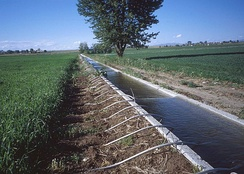 Irrigation of field crops