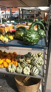 Gourds on display at Cambridge, Massachusetts