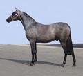 Мышастая лошадь